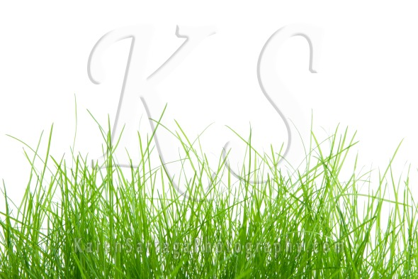 Green Grass Border On White | Stock Photo