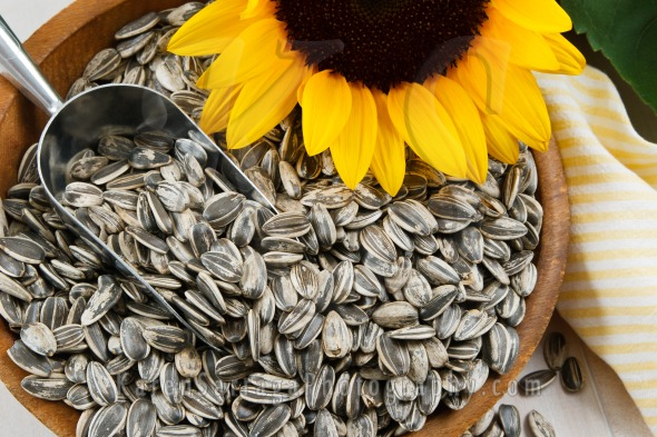 Sunfower With Sunflower Seeds | Stock Photo